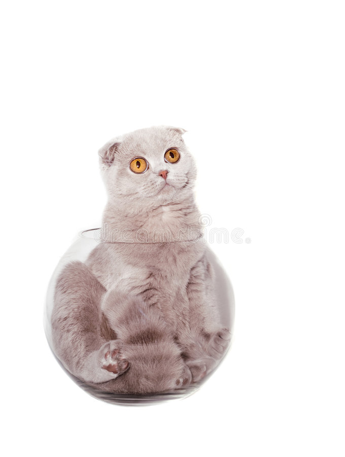 Kitten in a Round aquarium. Isolated stock images