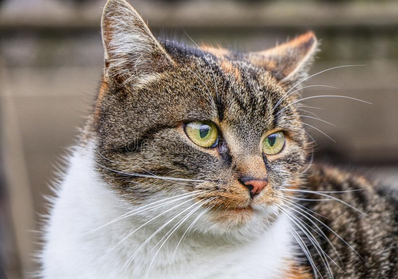 A kitten´s very cruel face watching some birds in far and thinking about her life. Colorful body.  royalty free stock images