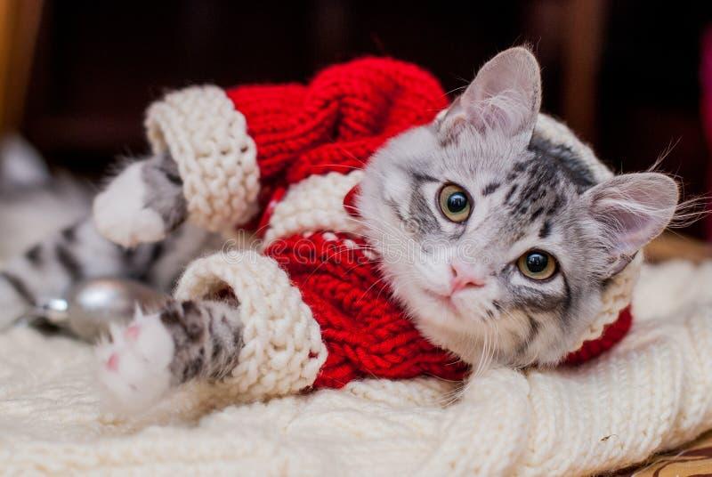 Kitten Santa Claus imágenes de archivo libres de regalías