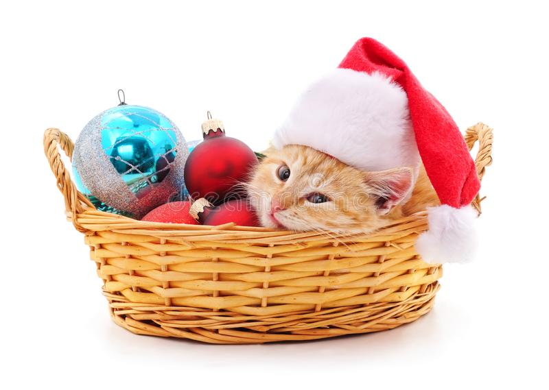 Kitten in a Santa hat in the basket royalty free stock image