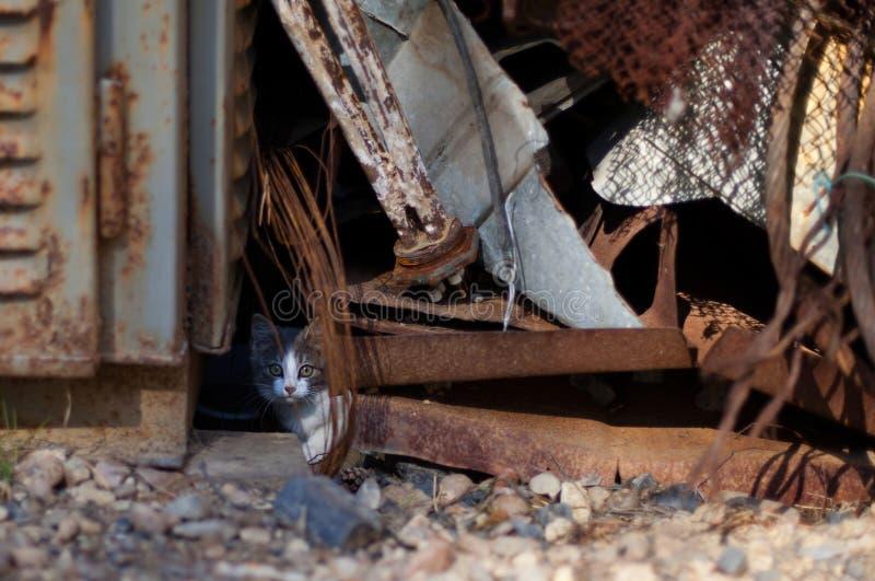 Download Kitten among scrap stock photo. Image of feline, hiding - 26550738