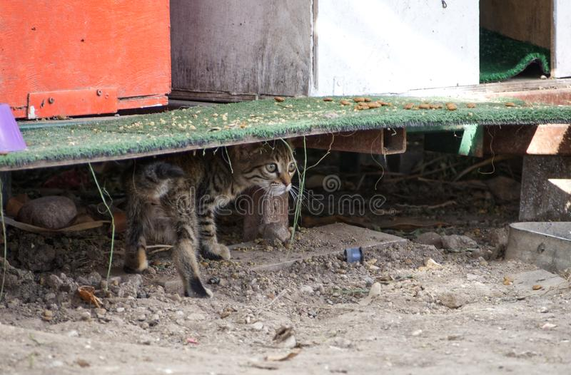 Stray cats. Kitten in shelter for cats stock image