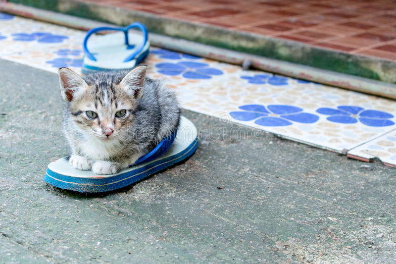 Kitten on the shoe royalty free stock image