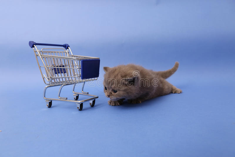 Kitten and a shopping cart. Baby kitten walking by a shopping cart, one week old royalty free stock photography