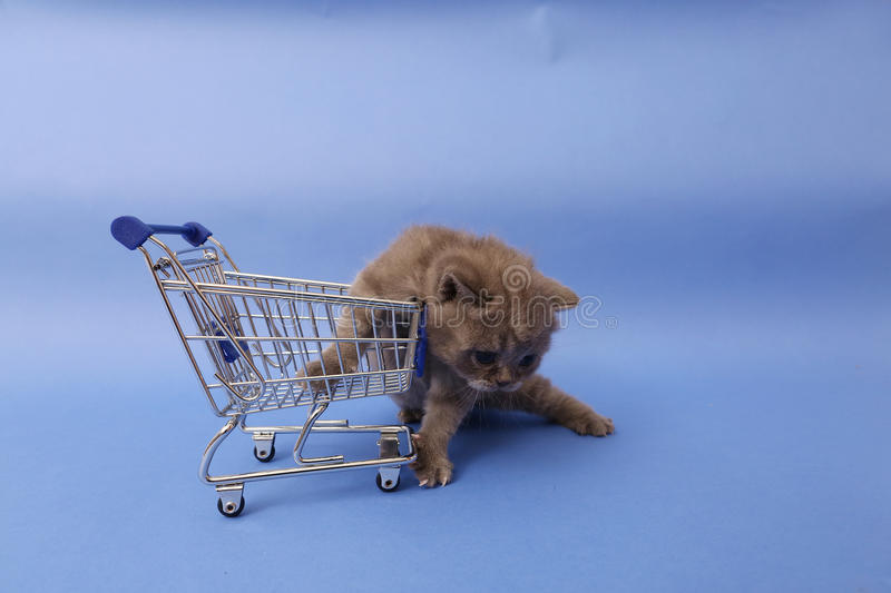 Kitten and a shopping cart. Baby kitten walking by a shopping cart, one week old stock photography