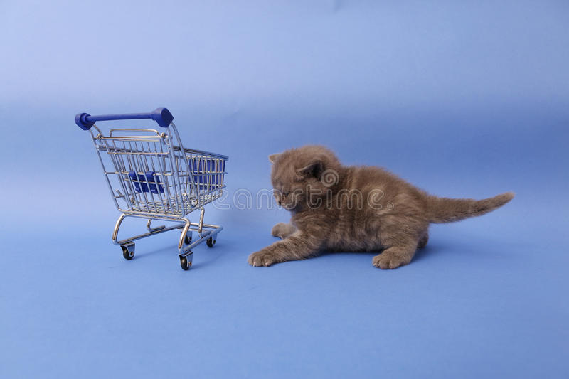 Kitten and a shopping cart. Baby kitten walking by a shopping cart, one week old royalty free stock image