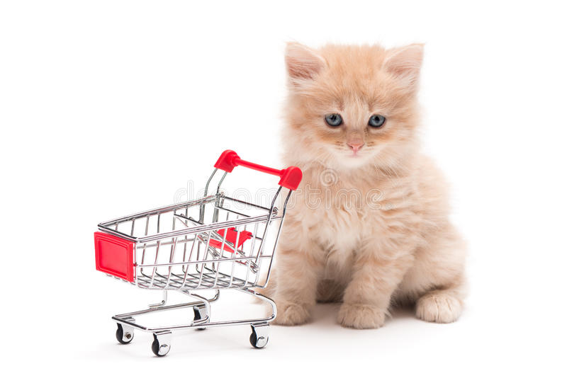 Kitten with shopping cart. British kitten with shopping cart over white background royalty free stock image