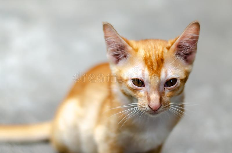 Kitten Sit On The Floor triste fotografie stock libere da diritti