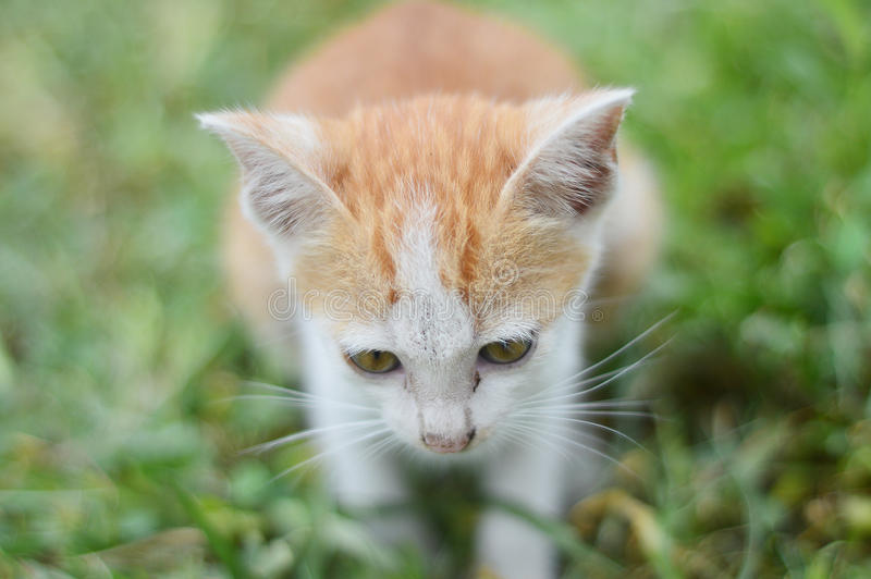 Download Kitten sit on grass stock image. Image of expression - 32395713