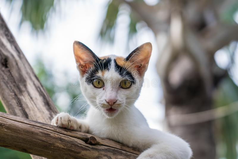 Kitten sits on a wood branch in the garden royalty free stock photography