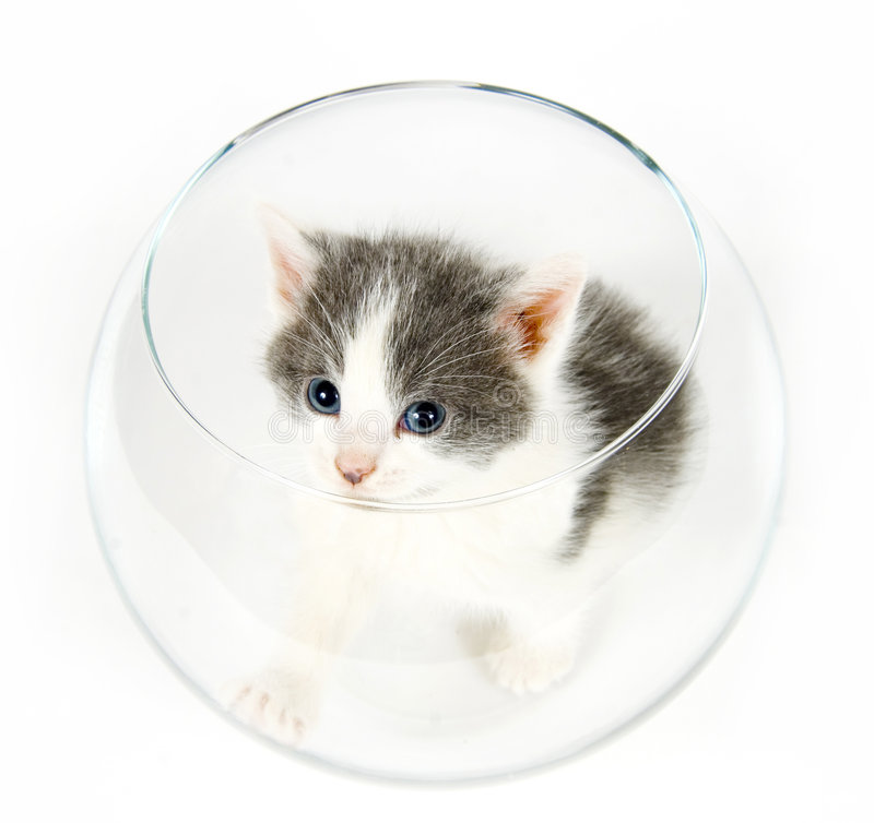 Kitten Sitting In A Fishbowl Stock Images