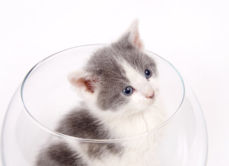 Download Kitten Sitting In A Fishbowl Stock Photo - Image: 2434518