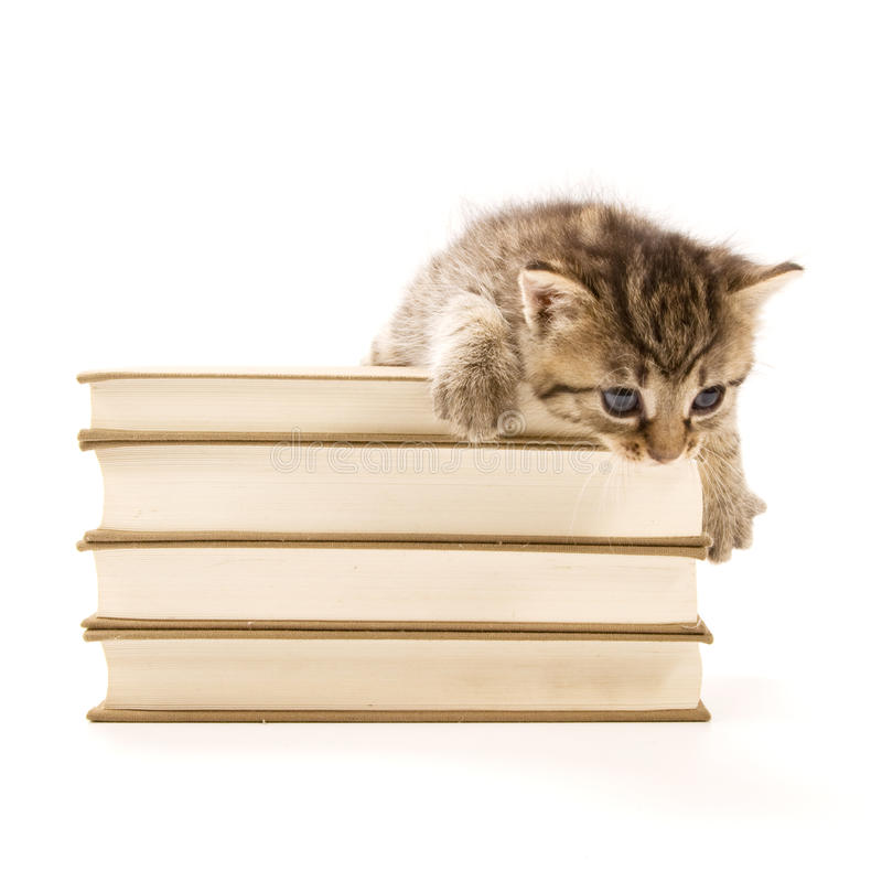 Download Kitten Sitting On A Pile Of Books Stock Photo - Image: 15170422
