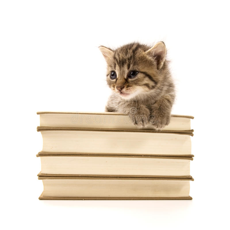 Download Kitten Sitting On A Pile Of Books Stock Photo - Image: 15170424