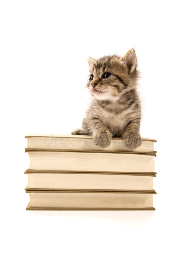 Download Kitten Sitting On A Pile Of Books Stock Image - Image: 15170427