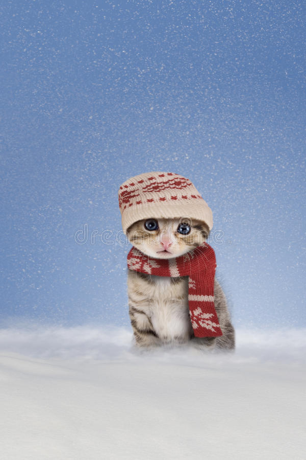 Kitten sitting in the snow. Kitten/Cat with scarf and hat sitting in the snow stock photography