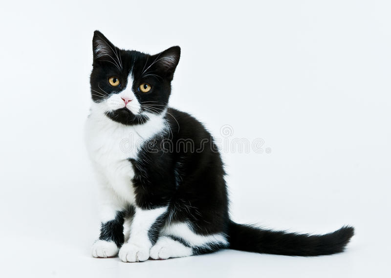Download Kitten sitting on a white stock image. Image of small - 12139949