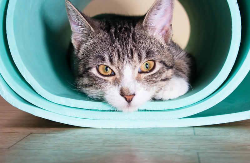 Kitten sitting on a yoga mat. Cat thinking, tired royalty free stock photo