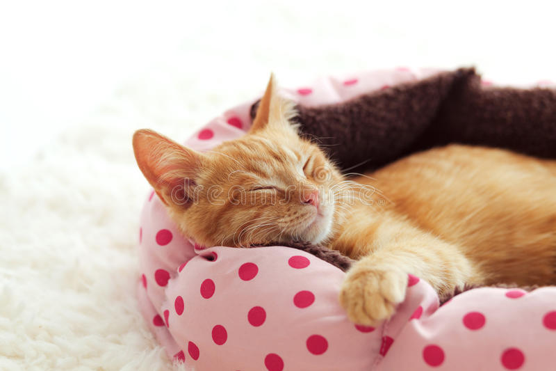 Kitten sleeping in the bed stock photos