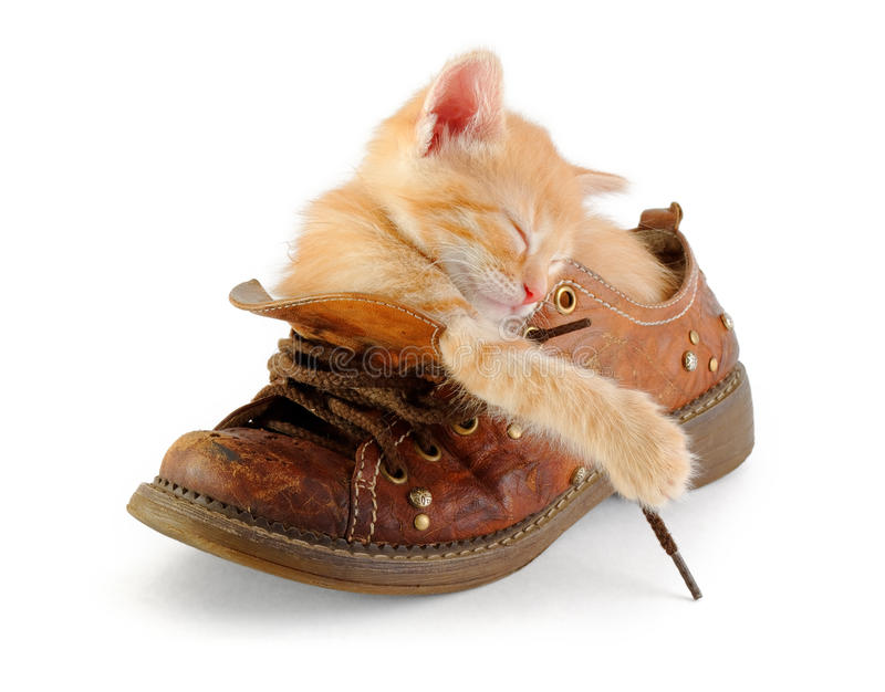 Kitten sleeping in old boot. Tiny red kitten sleeping in old boot royalty free stock photography