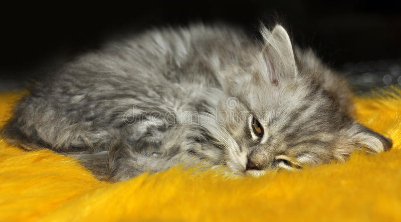 Download Kitten sleeping stock image. Image of peaceful, macro - 39513697