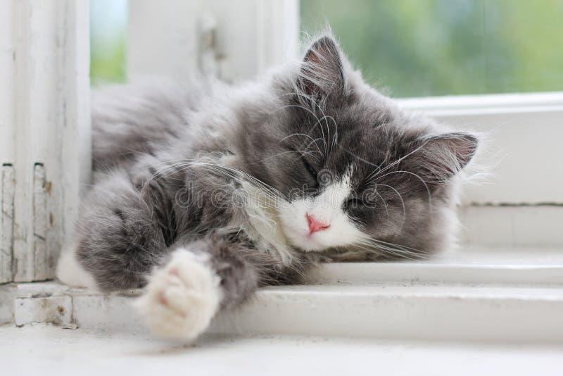 Download Kitten Sleeping On Window Ledge Stock Image - Image: 8468003