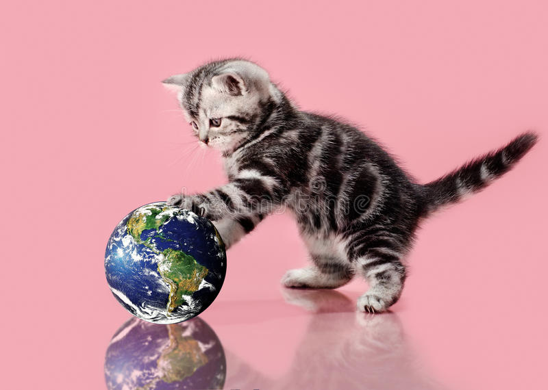 Kitten. The small, beautiful, fluffy, grey kitten, touch paws globe, on a white background, close-up image planet by: Stokli, Nelson, Hasler Laboratory for stock photo