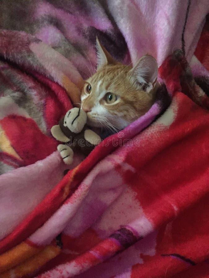 Kitten royalty free stock image