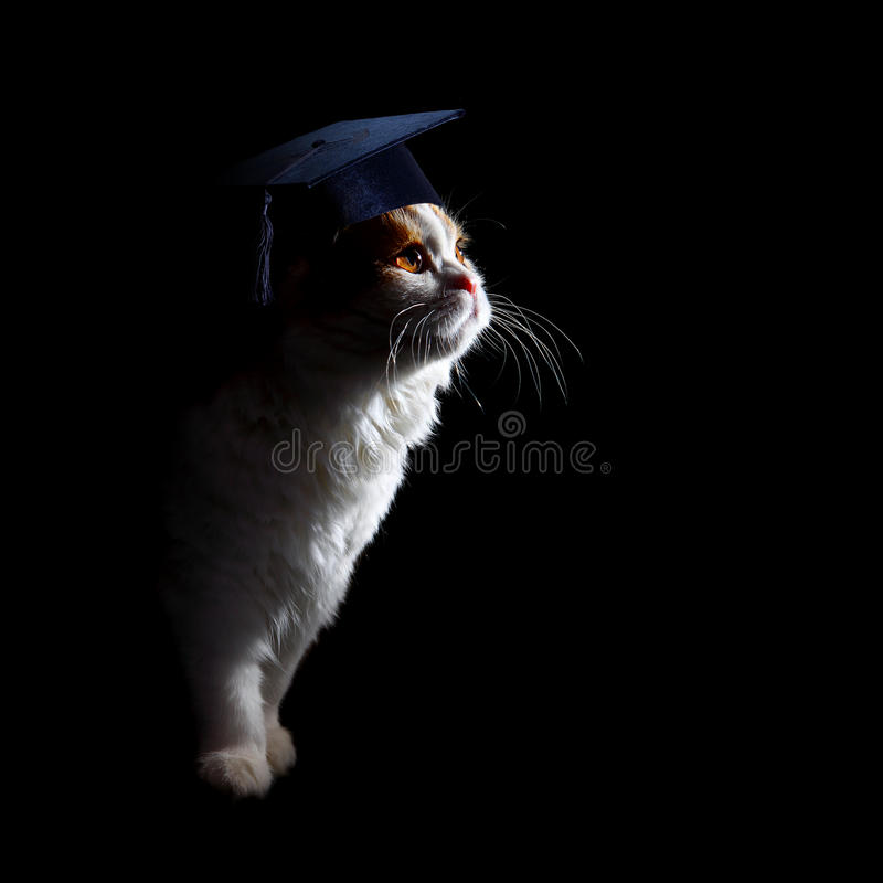 Kitten student stock photography