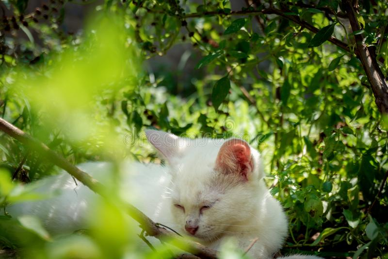 Kitten taking a nap under the trees stock photo