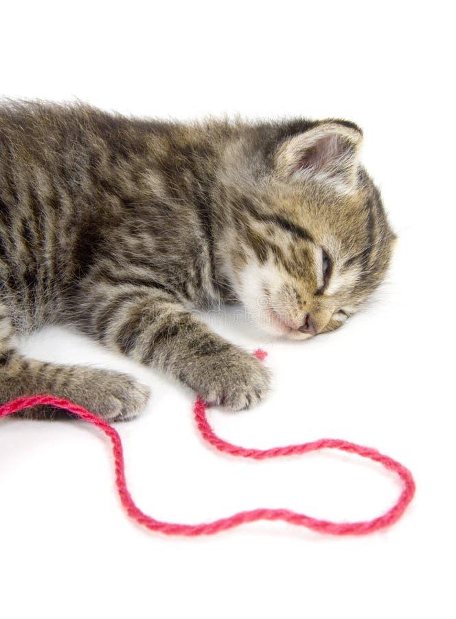 Kitten taking a nap on white background stock image