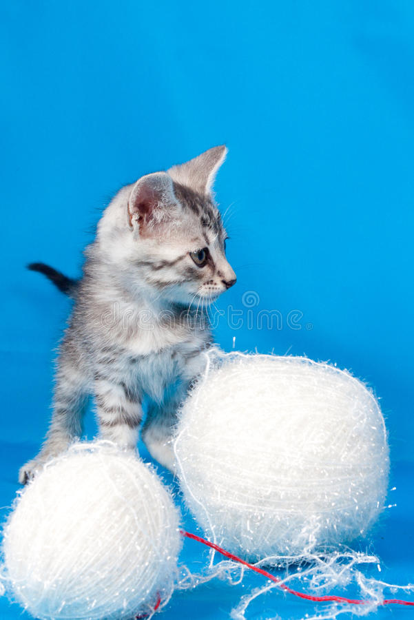 Download Kitten And Threads For Knitting Stock Image - Image: 26036019