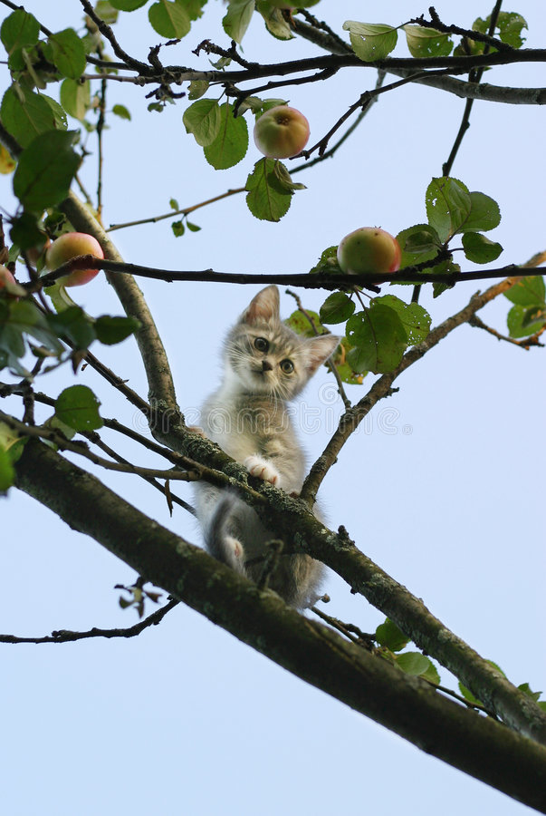 Kitten on a tree. The image of the scared kitten on a tree royalty free stock image