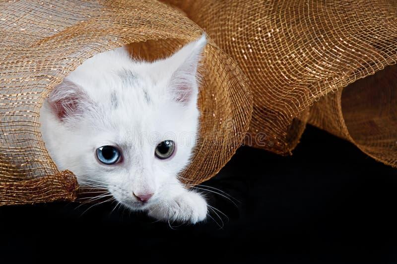 Kitten Under Holiday Mesh blanca fotos de archivo