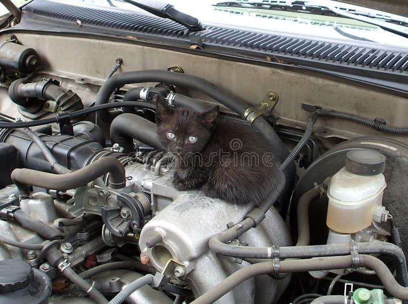 A Kitten Underneath the Hood stock photography