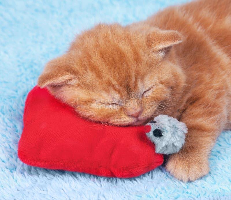 Kitten on Valentine's Day royalty free stock photos