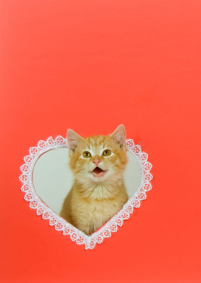 Free Kitten Valentine With Copy Space Royalty Free Stock Photo - 7629935