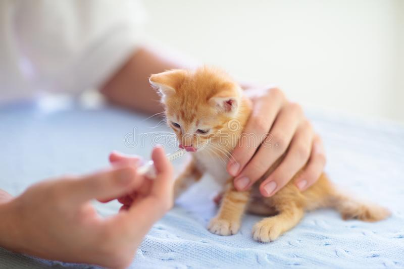 Kitten at vet clinic. Cat vaccination at doctor. Kitten at vet clinic. Little baby cat at checkup and vaccination. Medical examination of young animal. Pet care royalty free stock photos