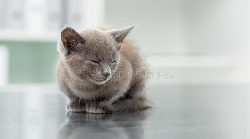 Kitten in veterinary office royalty free stock photography