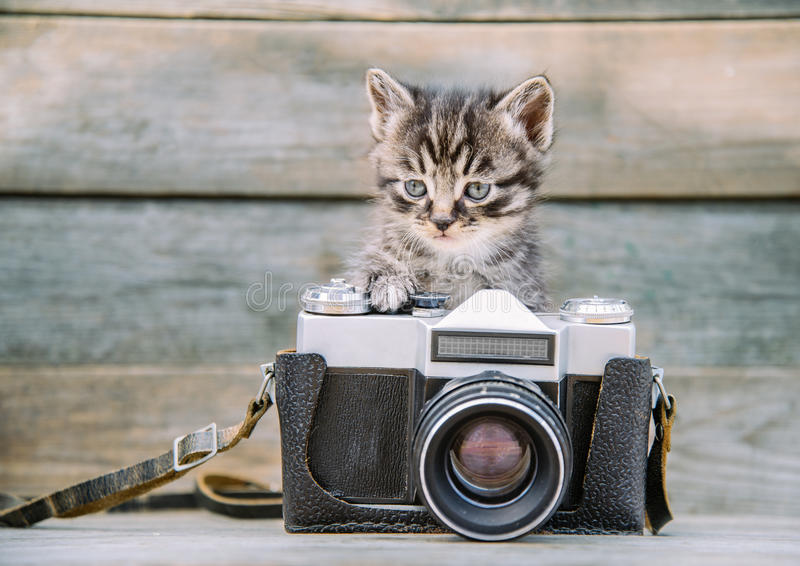 Kitten with vintage photo camera. Little cute kitten with vintage photo camera on a wooden table stock photos