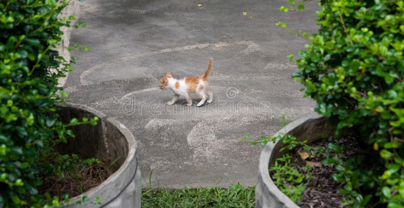 Kitten walking around the house royalty free stock images