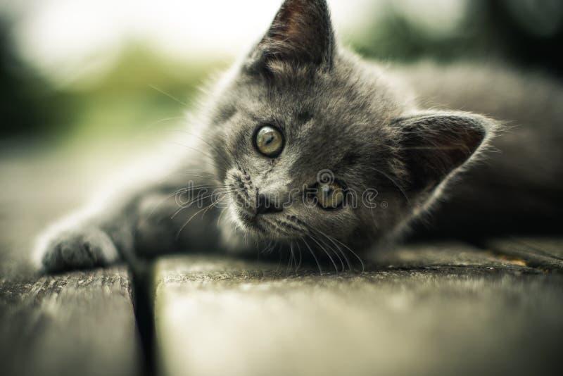 Kitten on walkway stock photos