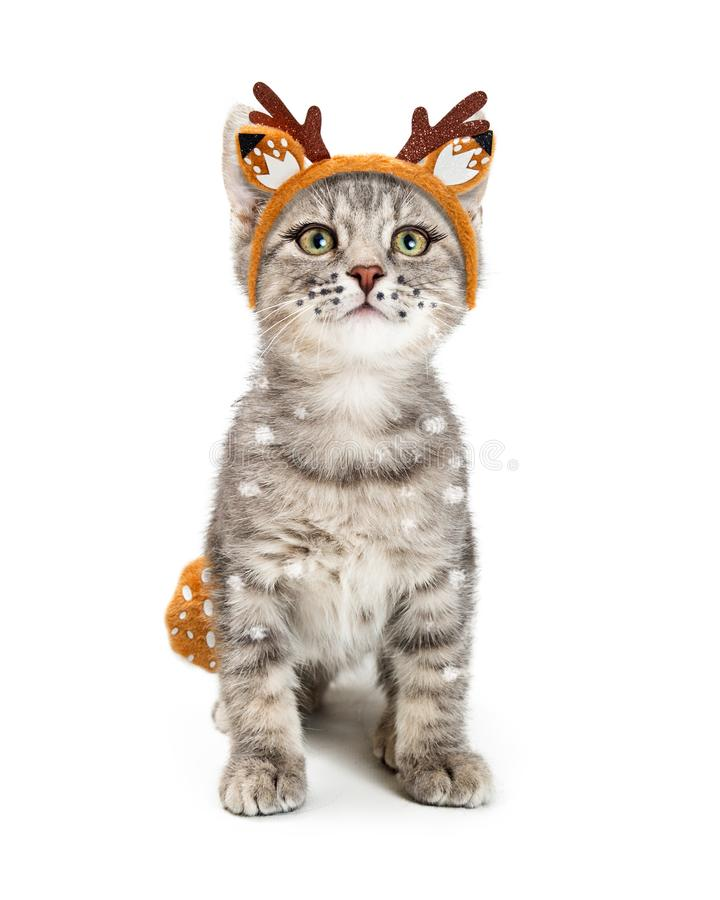 Kitten Wearing Deer Halloween Costume bonito foto de stock royalty free