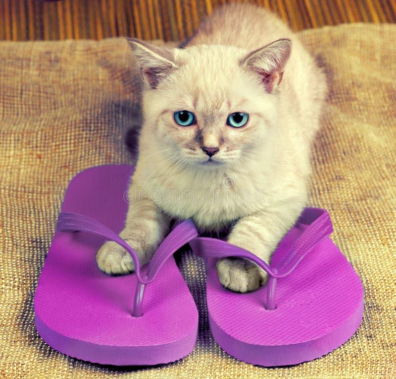 Kitten wearing flip flops sandals. Summer scene. Little kitten wearing flip flops sandals stock image