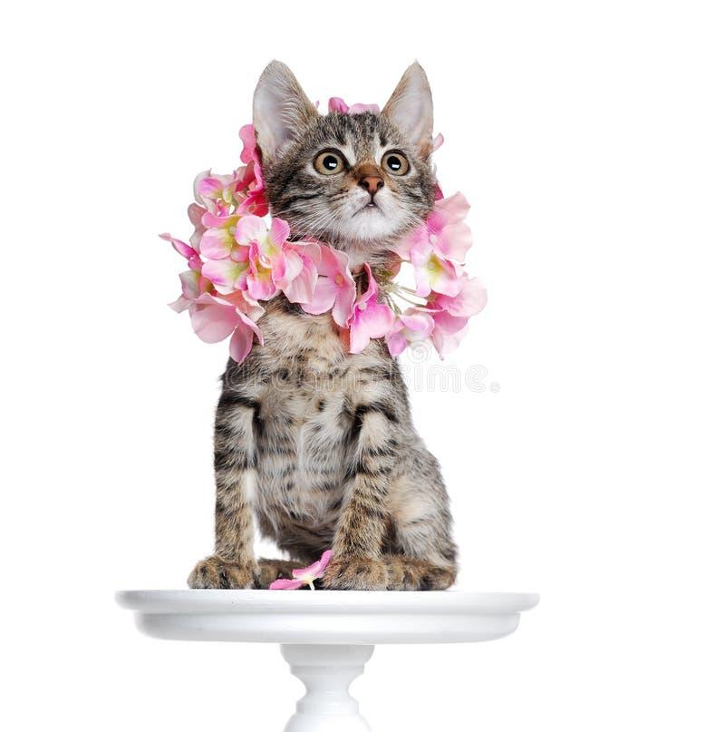 Kitten wearing flowers collar royalty free stock images
