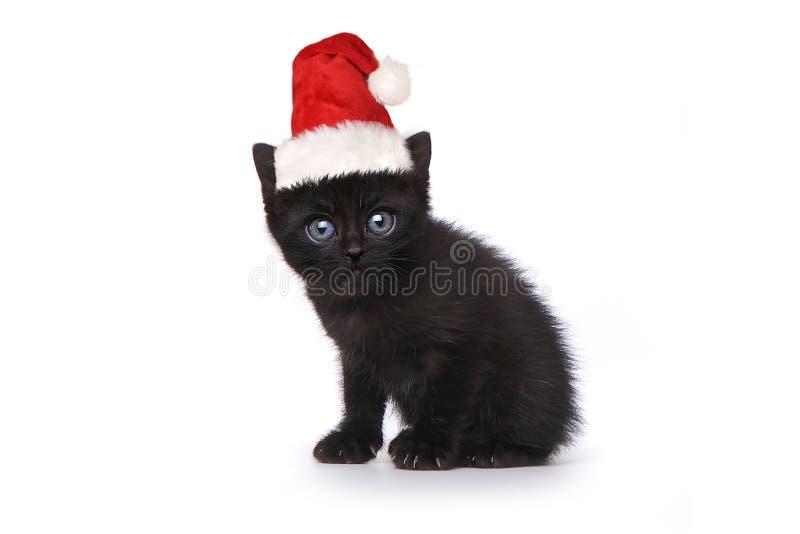 Kitten Wearing negra Santa Hat en blanco foto de archivo libre de regalías