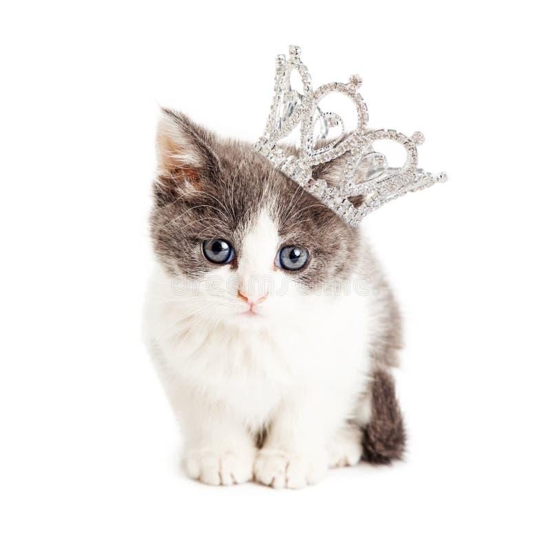 Kitten Wearing Princess Crown bonito fotografia de stock