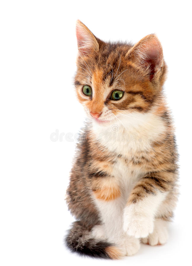 Download Kitten On White Royalty Free Stock Photography - Image: 25545297