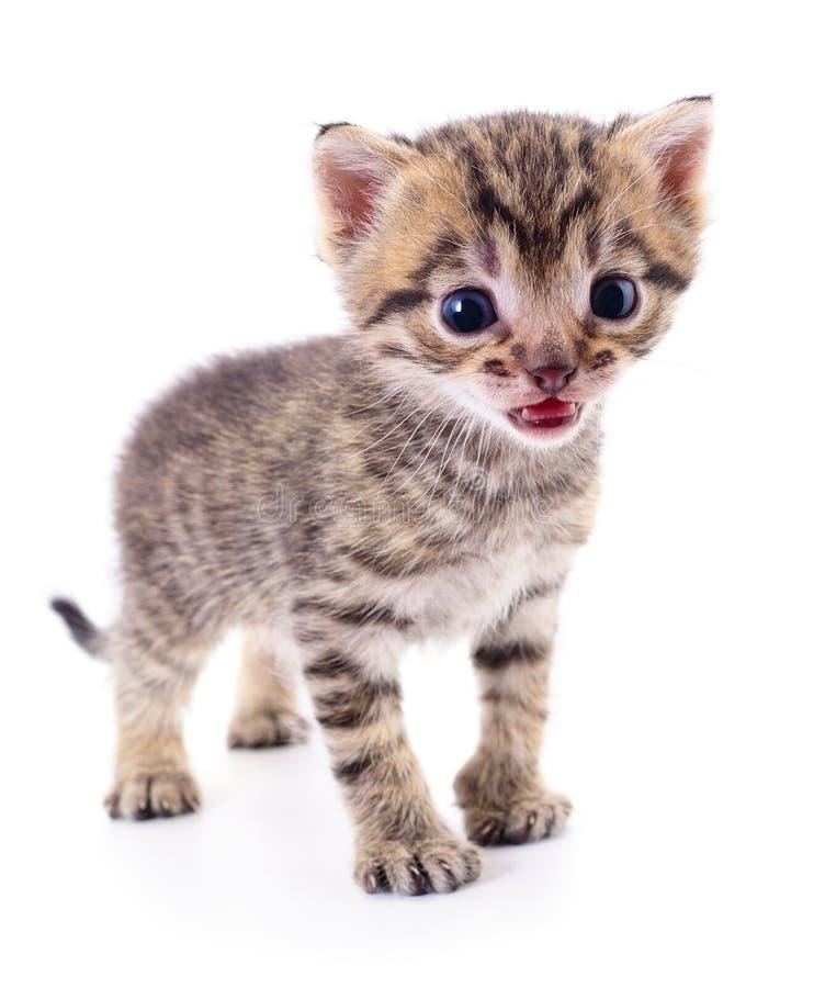 Kitten on white background. stock photos