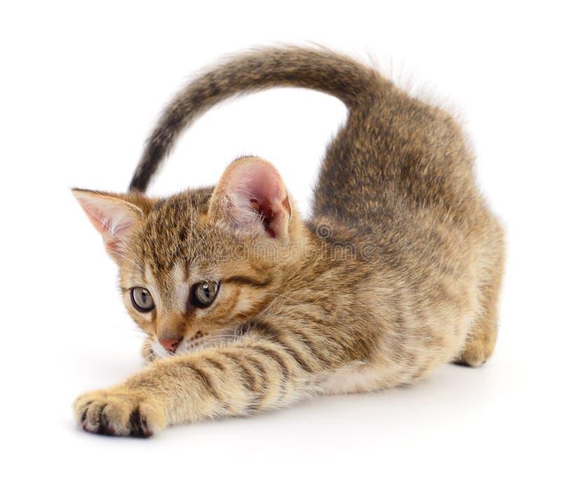 Kitten on white background. stock images